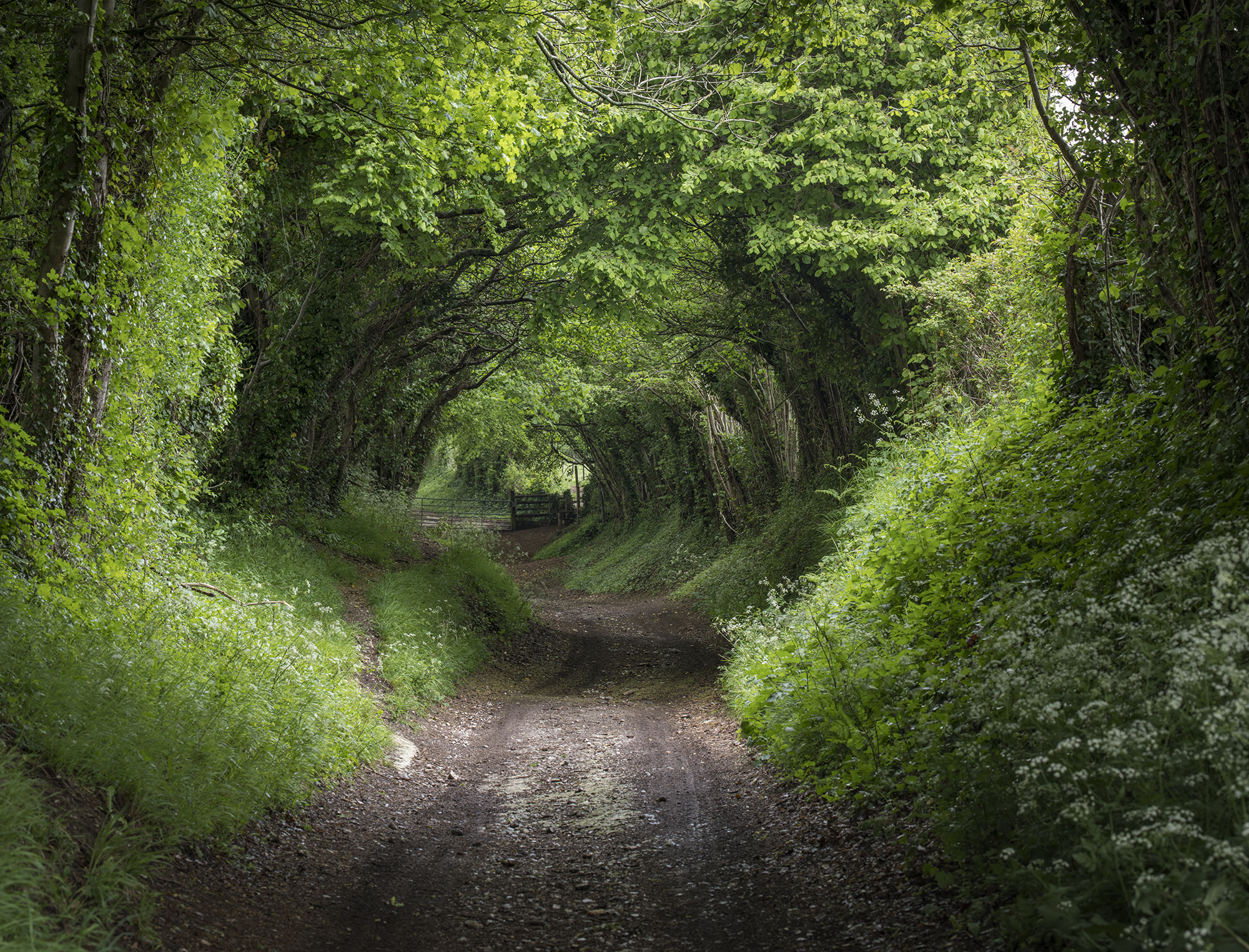 Tunnel of Green2.jpg